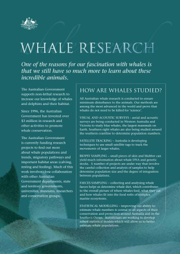 blue whale instruction sheet