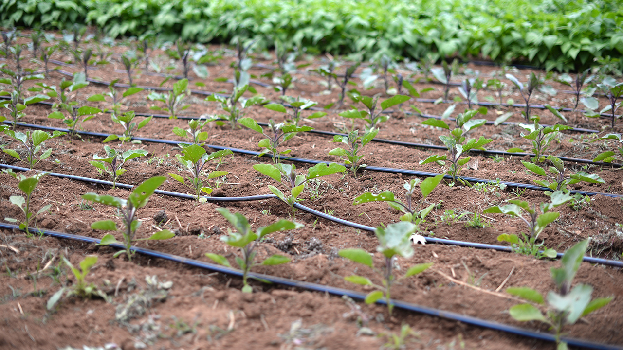 drip irrigation application rate