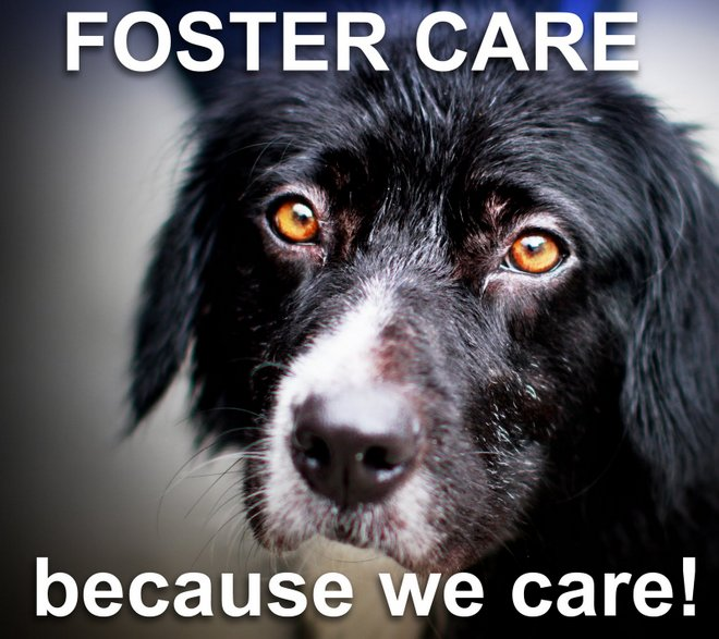 dog foster care manual