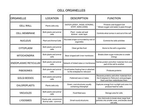 cell organelles and their functions chart pdf