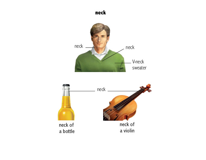 dictionary necks