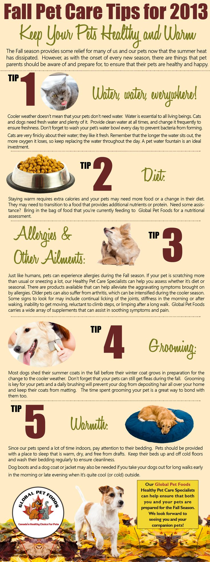 dog care guide