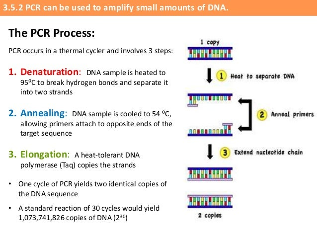 application of pcr in biotechnology