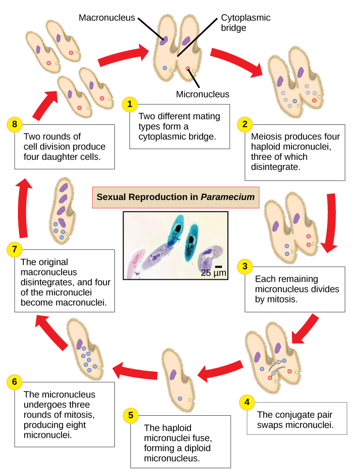bacteria structure and function pdf
