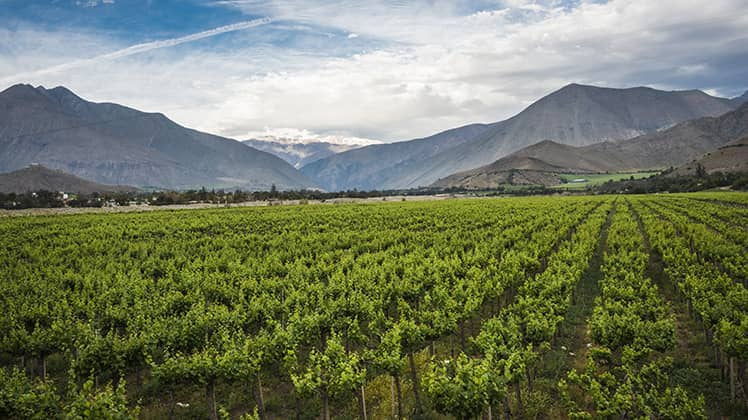 chilean wine guide