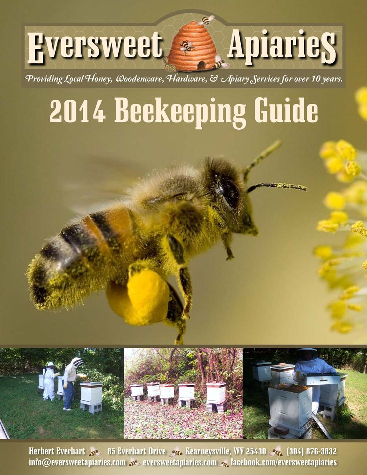 beekeeping manual pdf
