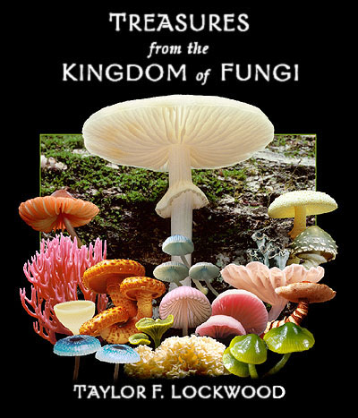a photographic guide to mushrooms other fungi of nz